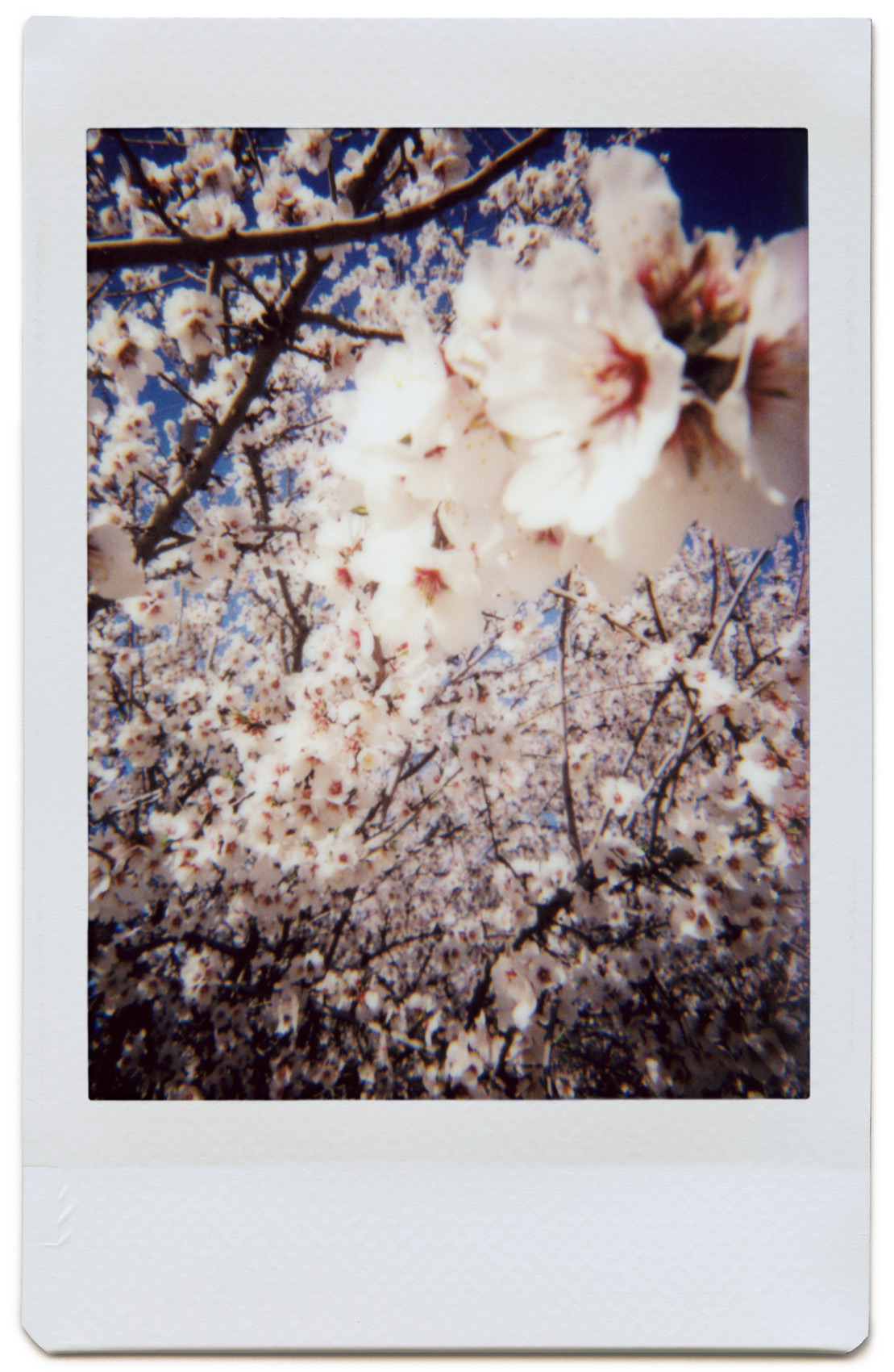 Blossoms-03